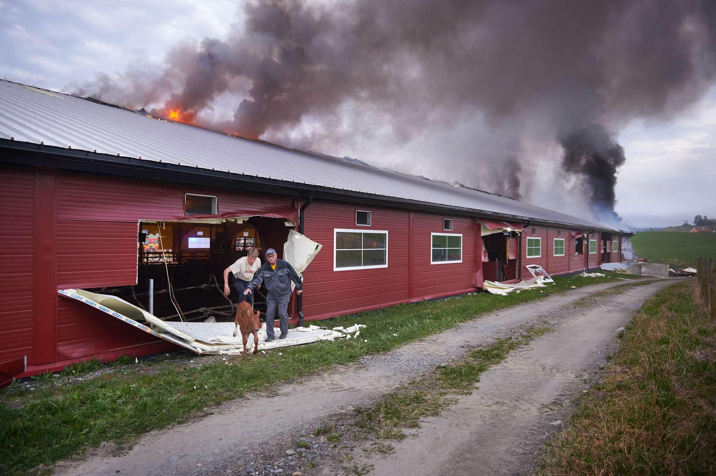 01-10630-brann